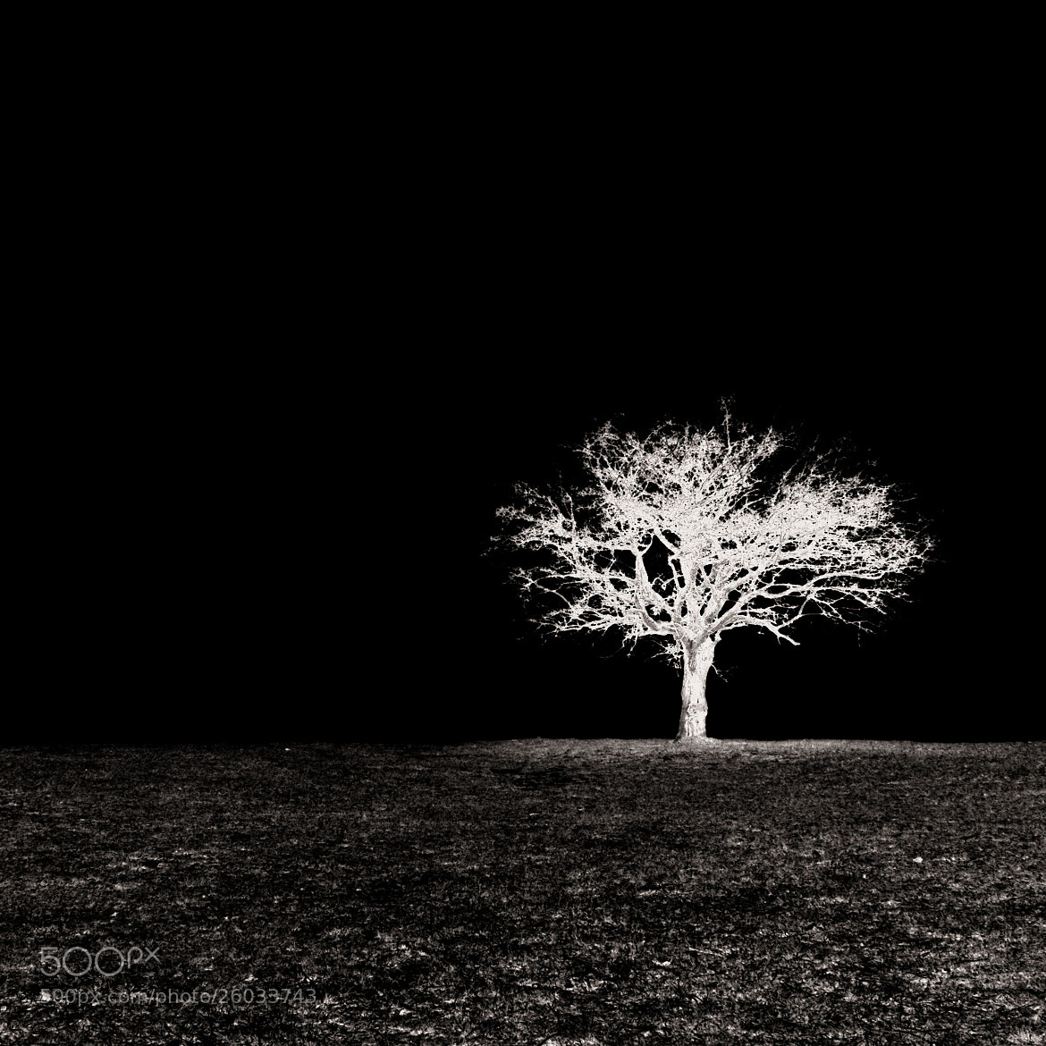 Photograph Les Andelys Tree study 2 by Olivier Bergeron on 500px
