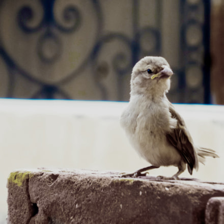 Sad Bird, Samsung Galaxy K Zoom