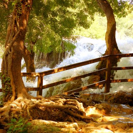 Strange roots on riverbank, Nikon COOLPIX L610
