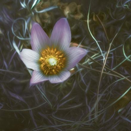 Forest Floor Treasure, Nikon COOLPIX P7100