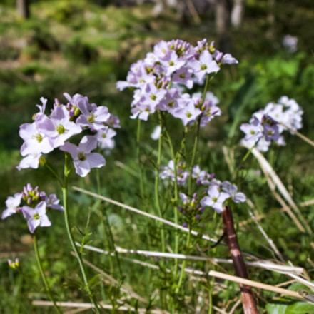 Blossom, Canon EOS M10