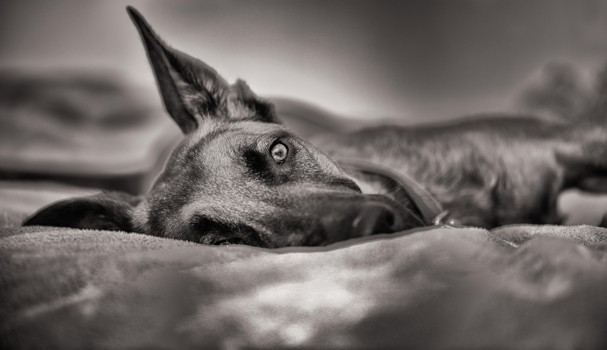 Photograph Dog Day Afternoon by Marshall Humble on 500px