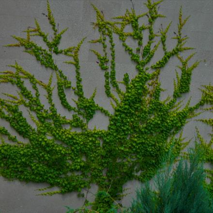 tree, Nikon COOLPIX L120