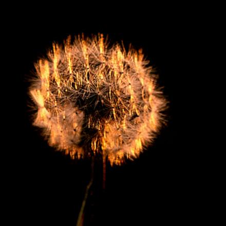 Flower, Nikon D2XS, Sigma 70-300mm F4-5.6 APO Macro Super II