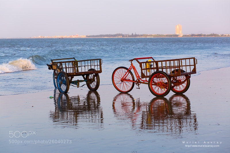 Photograph Tricycles by Muriel Auvray on 500px