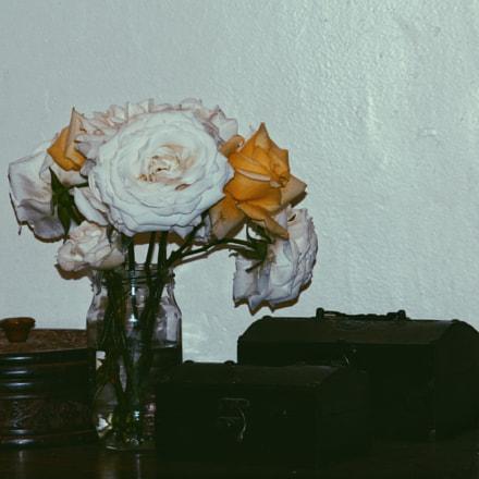 Roses, Nikon COOLPIX L310