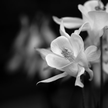 Black and white flowers #1/2, Sony SLT-A65V, Tamron SP AF 90mm F2.8 Di Macro
