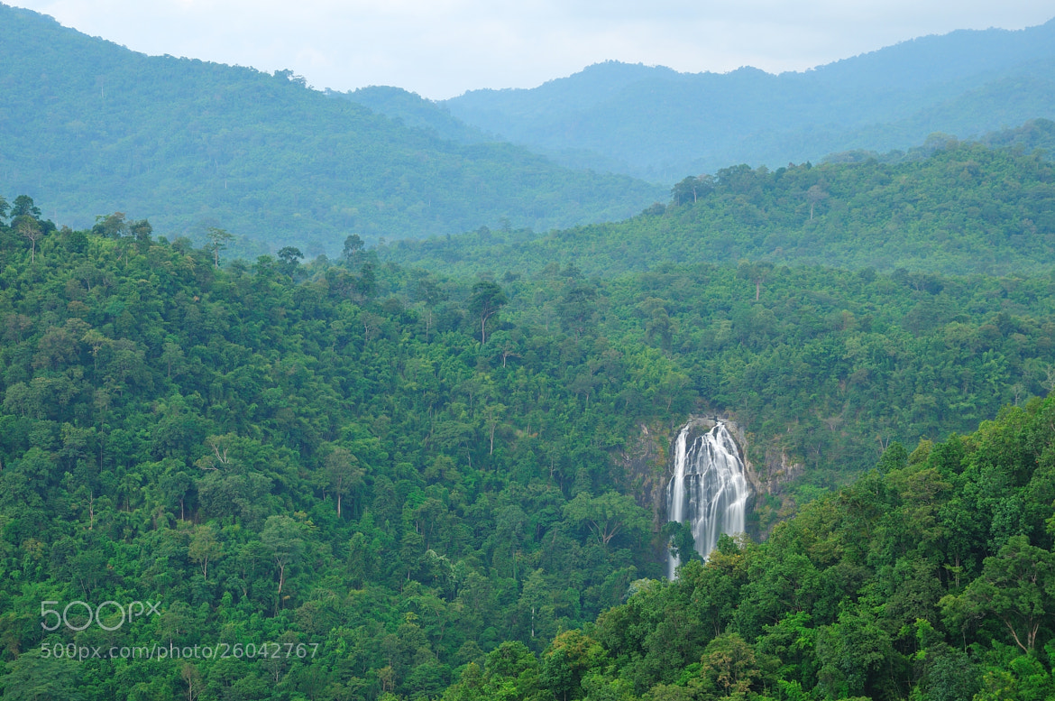 Photograph The Forest by Photos of Thailand .... on 500px