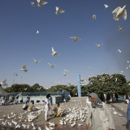 White doves of Mazar-i-Sharif, Canon EOS 40D, Canon EF-S 10-22mm f/3.5-4.5 USM