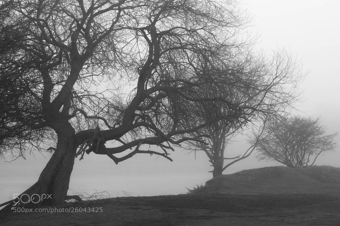 Photograph Misty Trees by Carl Mickleburgh on 500px