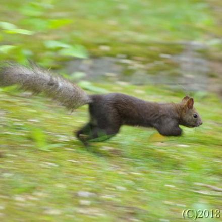 Run, Pentax K-5