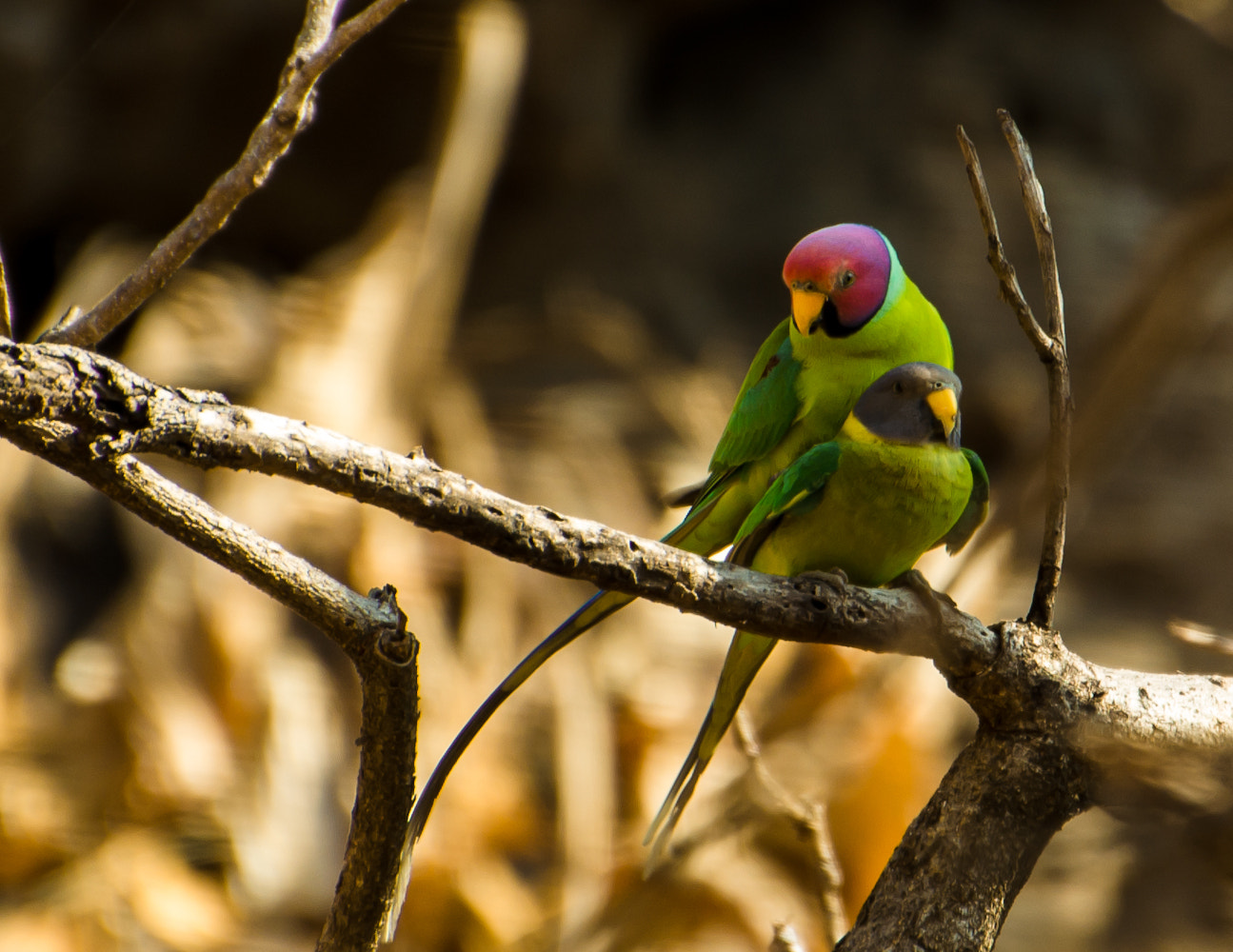 Photograph We found Love  by Mahesh Shenoy on 500px