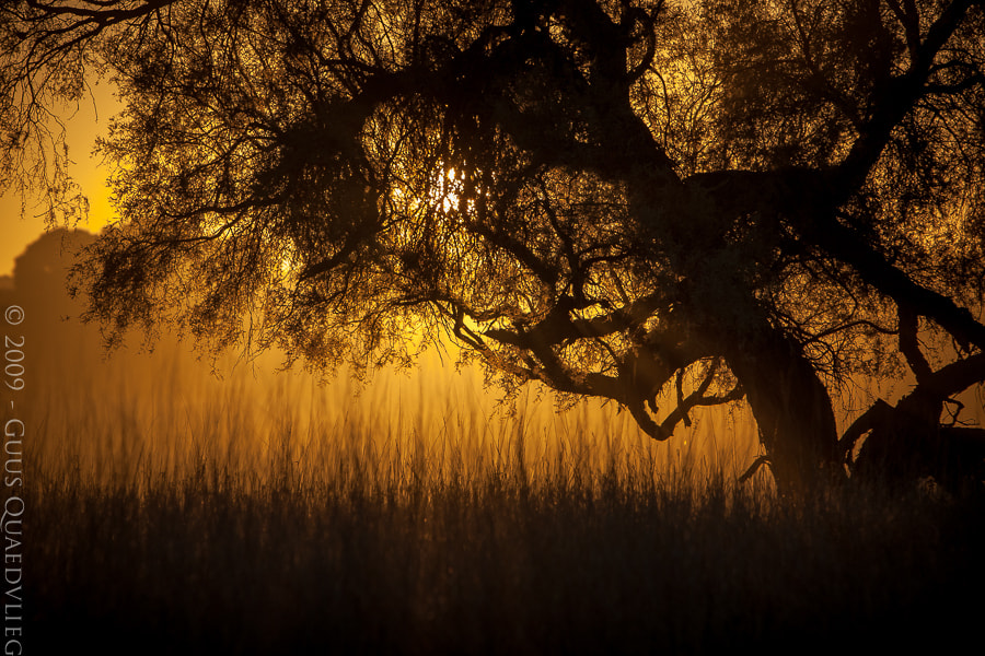 Photograph Kalahari Sunrise by Guus Quaedvlieg on 500px