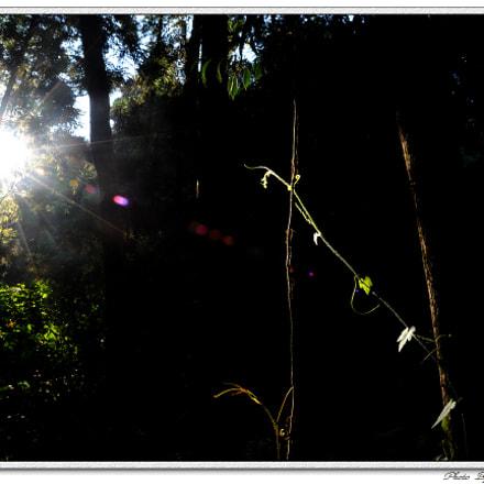 DSC_6019-1.jpg, Nikon D700, Sigma 28-70mm F2.8 EX