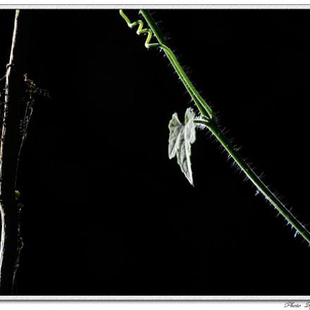 DSC_6028-1.jpg, Nikon D700, Sigma 70-300mm F4-5.6 APO Macro Super II