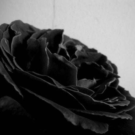 Femme Fleur 13, Sony DSC-W610