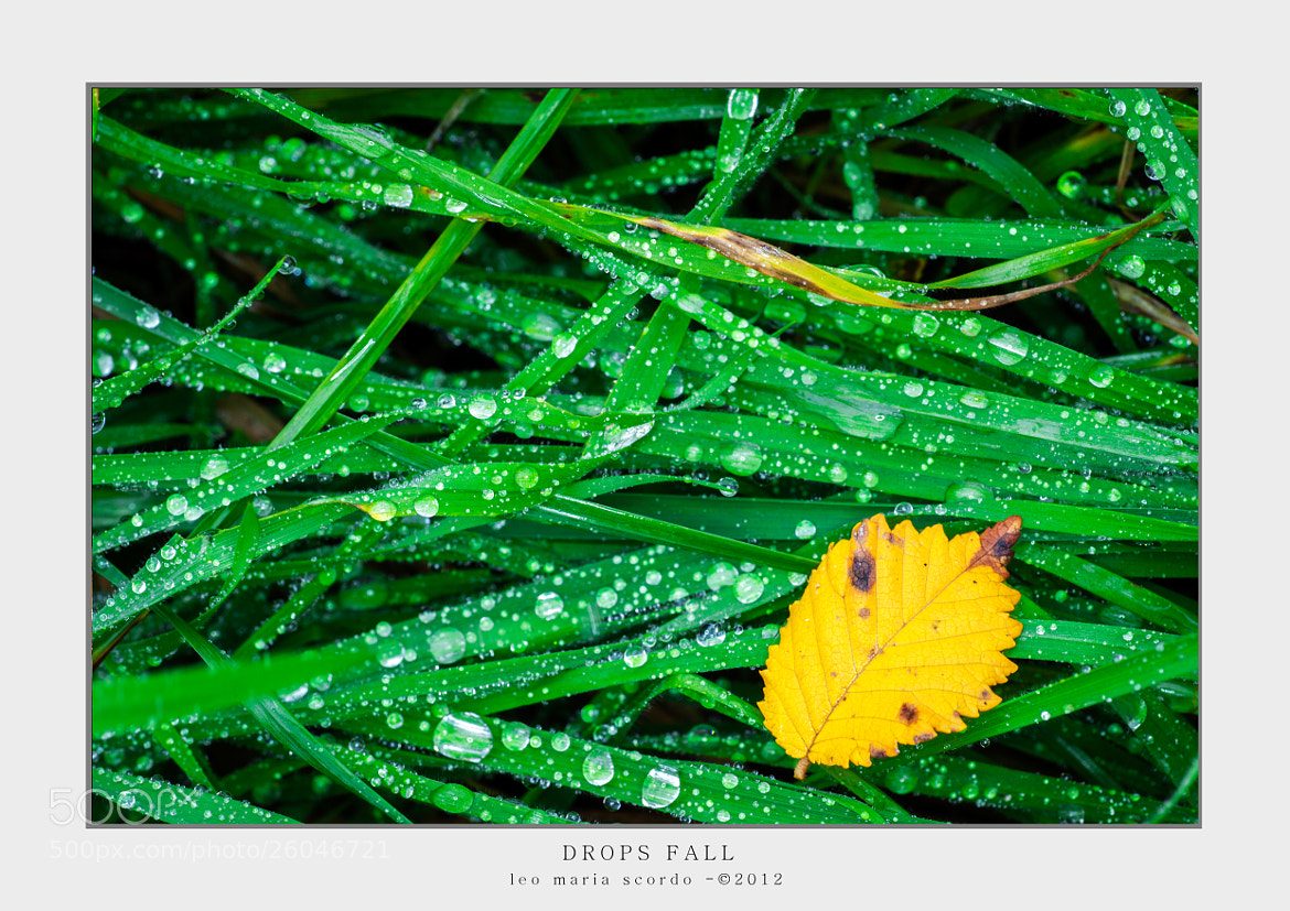 Photograph DROPS FALL by Leo Maria Scordo on 500px