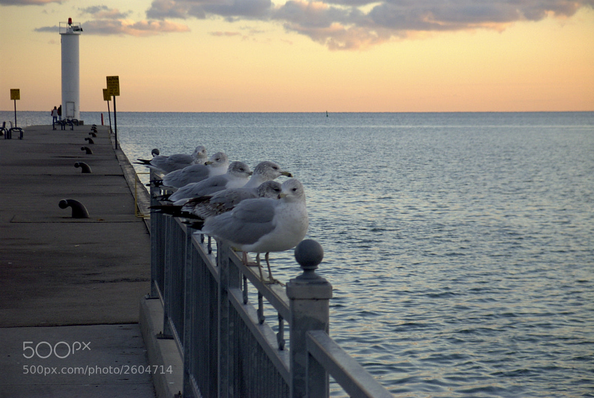 Photograph Gulls by Dario Zingone on 500px
