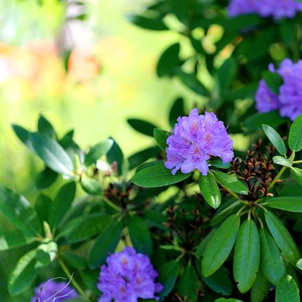 Overgrown garden ⊰✿, Canon EOS 5D MARK III