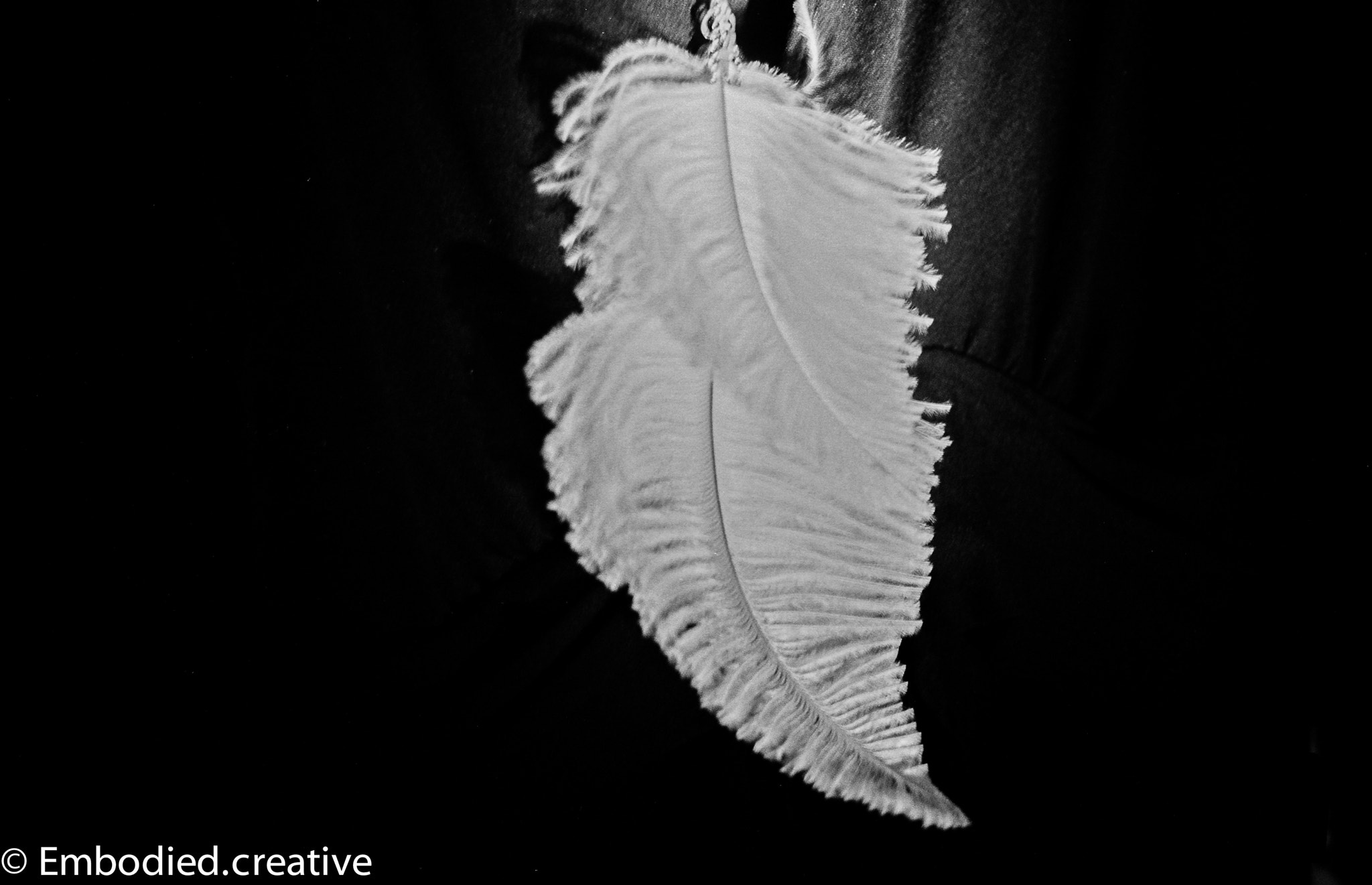 Photograph Feather by Rob Burton on 500px