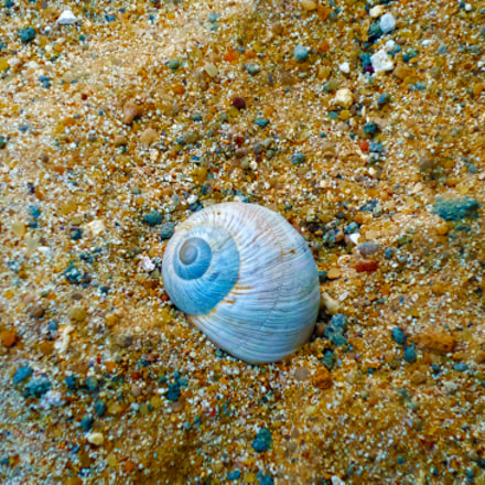 The snail shell, Samsung Galaxy K Zoom