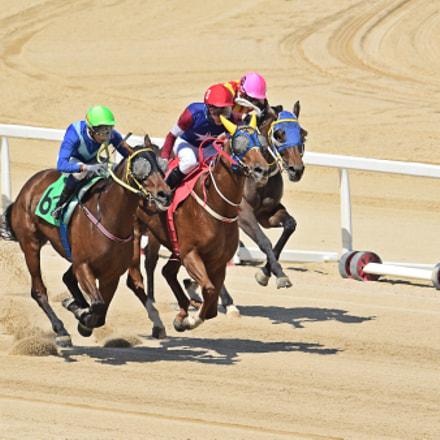 Horse Racing, Nikon D500, AF-S VR Nikkor 600mm f/4G ED