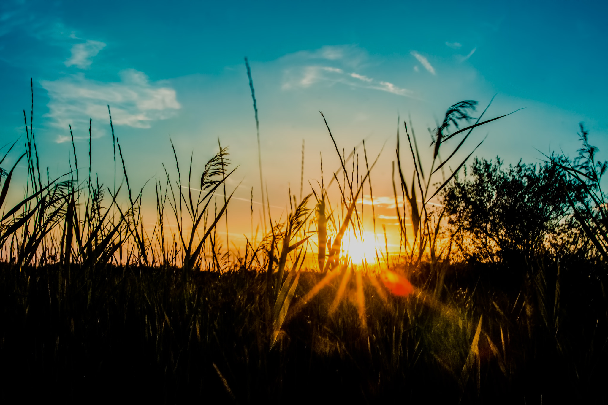 Photograph Sunset from grass by Petre Cojocea on 500px