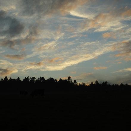 evening bullocks, Fujifilm FinePix HS50EXR