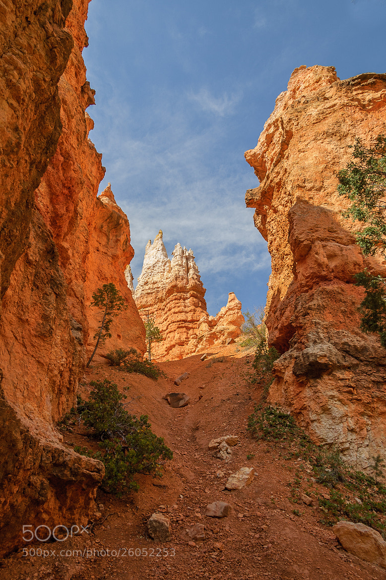 Photograph Bryce Canyon View by Mark Ellison on 500px