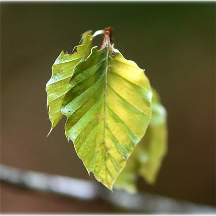 """""""lindgreen"""", Nikon D7200"""