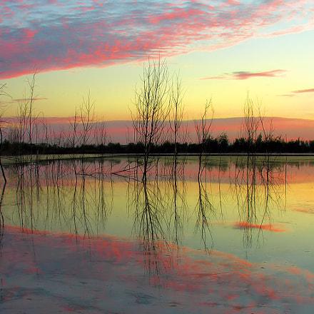 Sunrise with dead trees, Nikon E8800