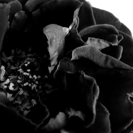 Femme Fleur #15, Sony DSC-W610