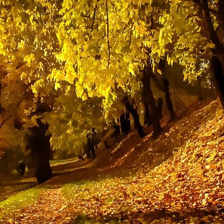 autumn, Sony DSC-H50