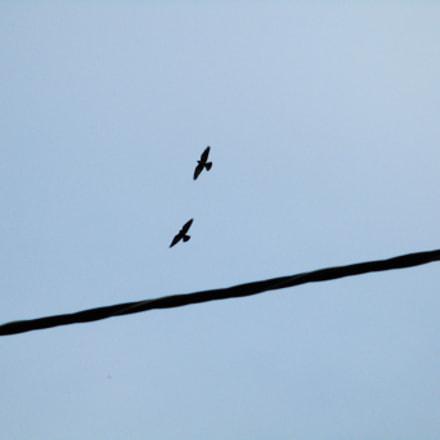 Birds, Canon IXUS 160