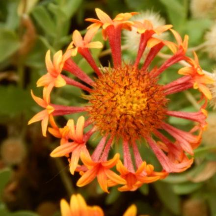 bloom.jpg, Nikon COOLPIX AW130
