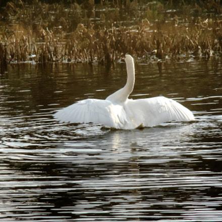 swan dance, Sony DSC-H50