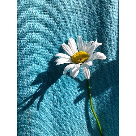 daisy ♥, Samsung Galaxy Core