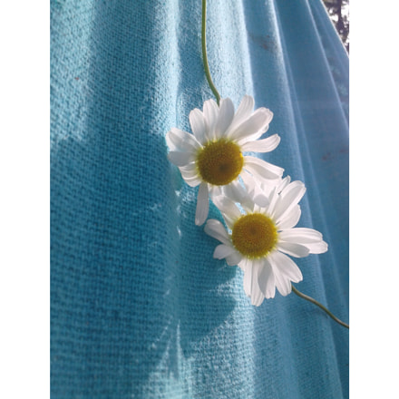 daisy♥, Samsung Galaxy Core