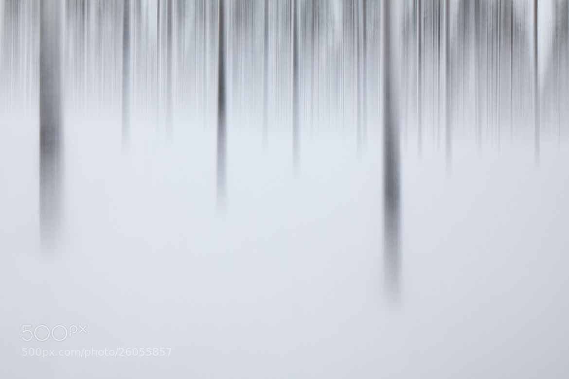 Photograph Pines in snow by Terry Gibbins on 500px