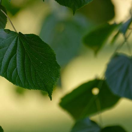 Leaf, Nikon D7100