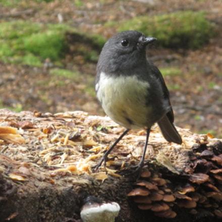 Angry Bird, Canon IXUS 135