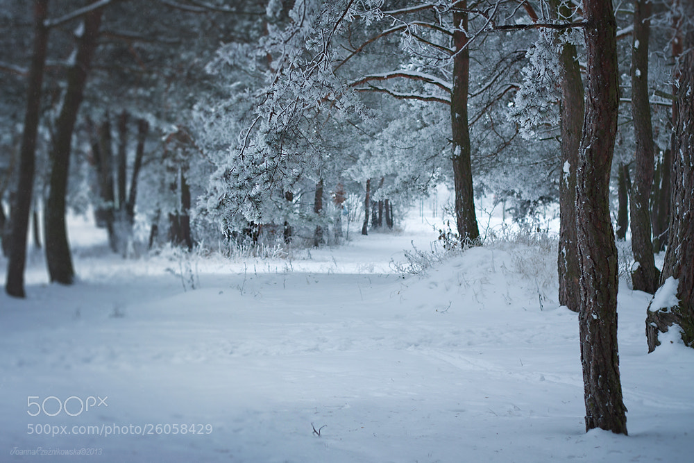 Photograph Winter II by Joanna Rzeźnikowska on 500px