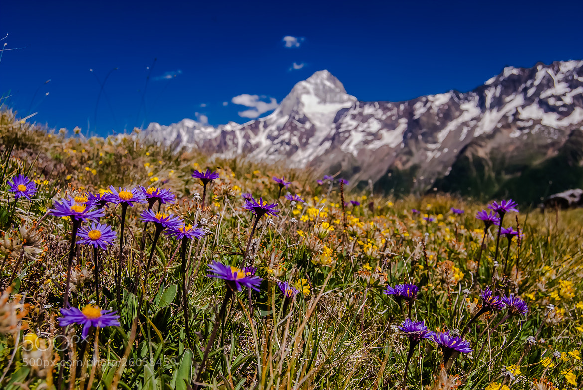 Photograph Alpine flowers with the Mountain Breithorn by Uwe Weckelmann on 500px
