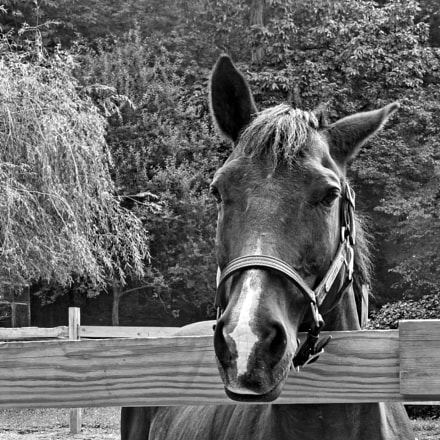 Horse Close-up, Panasonic DMC-ZS19