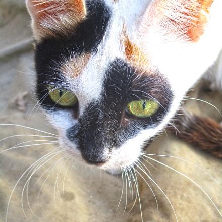 Cat, Canon POWERSHOT ELPH 160