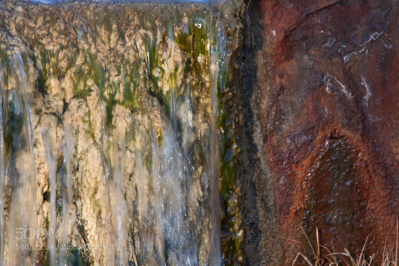 Photograph Algae & Rust by Anton Green on 500px