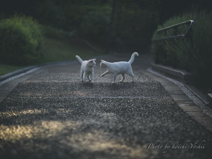 白猫物語。, автор — Koichi YOSHII на 500px.com
