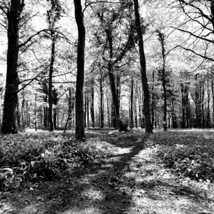 Trees, Nikon D2X, Tokina AT-X 116 PRO DX (AF 11-16mm f/2.8)