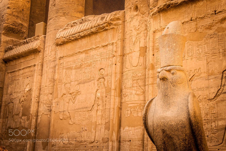 Photograph Horus by Mohamed Hegazi on 500px