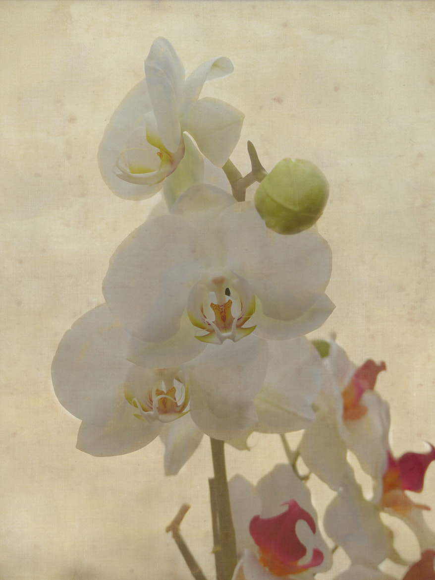 Photograph Textured Orchids by Brian Nelson on 500px